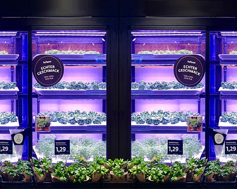 LED-Beleuchtung im Indoor Farming am Beispiel von Grow-Schränken