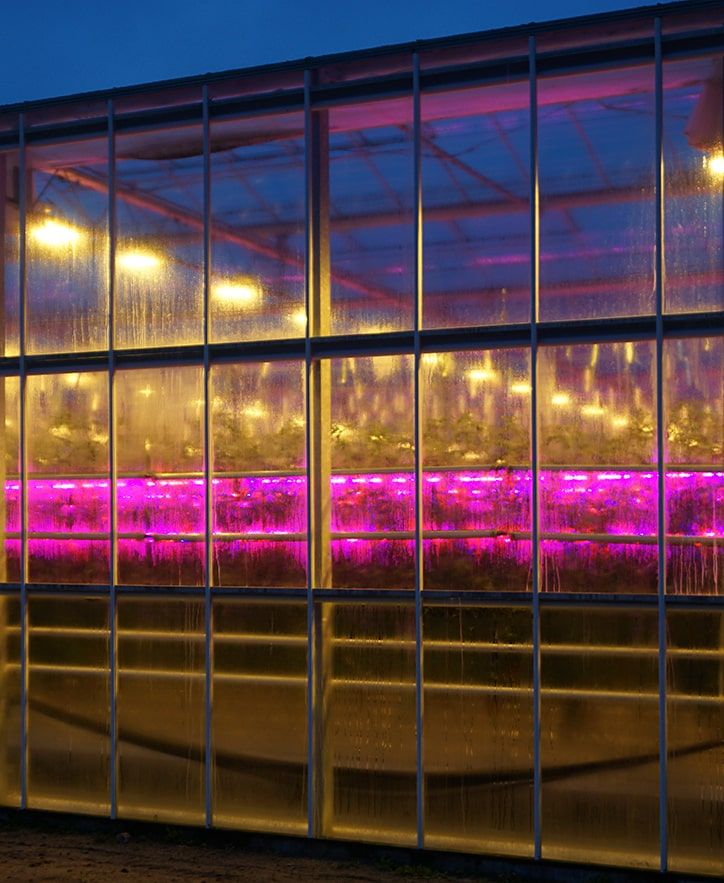 LED Gewächshausbeleuchtung im Detail