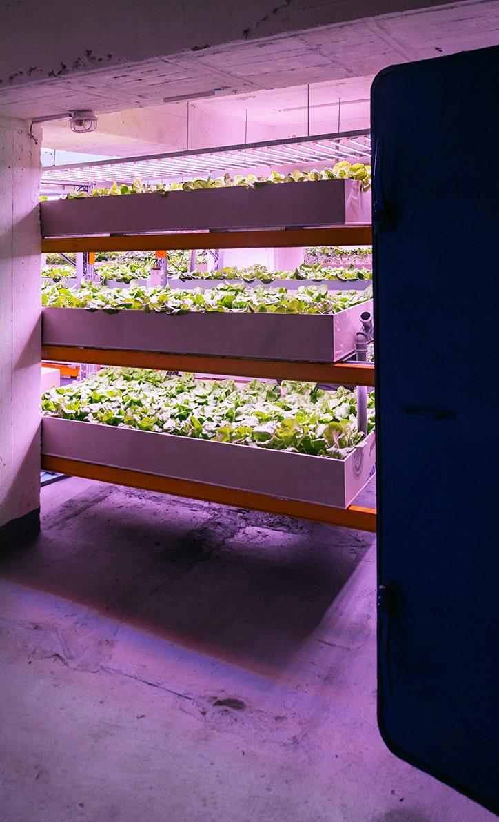 Underground Urban Farming in einem alten Bunker