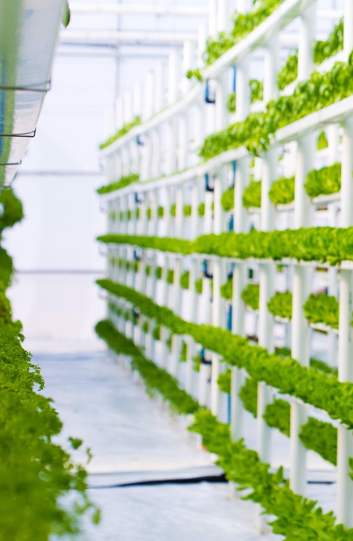 Beispiel von Vertical Farming