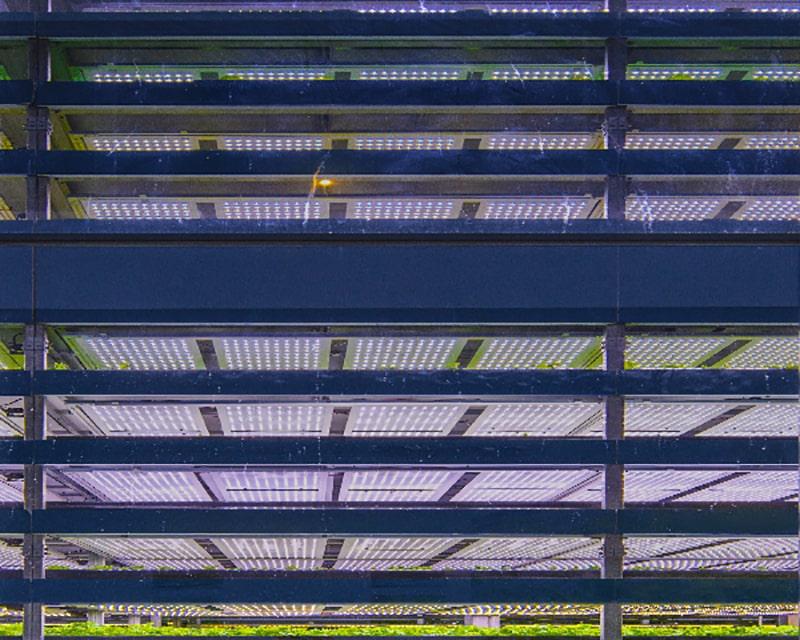 Großflächiger Einsatz von LEDs im Vertical Farming