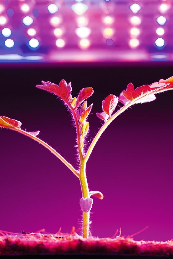 Indoor-Farming mit LEDs